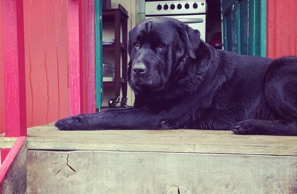 Brooker dog